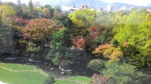 Nakajima Park from my room