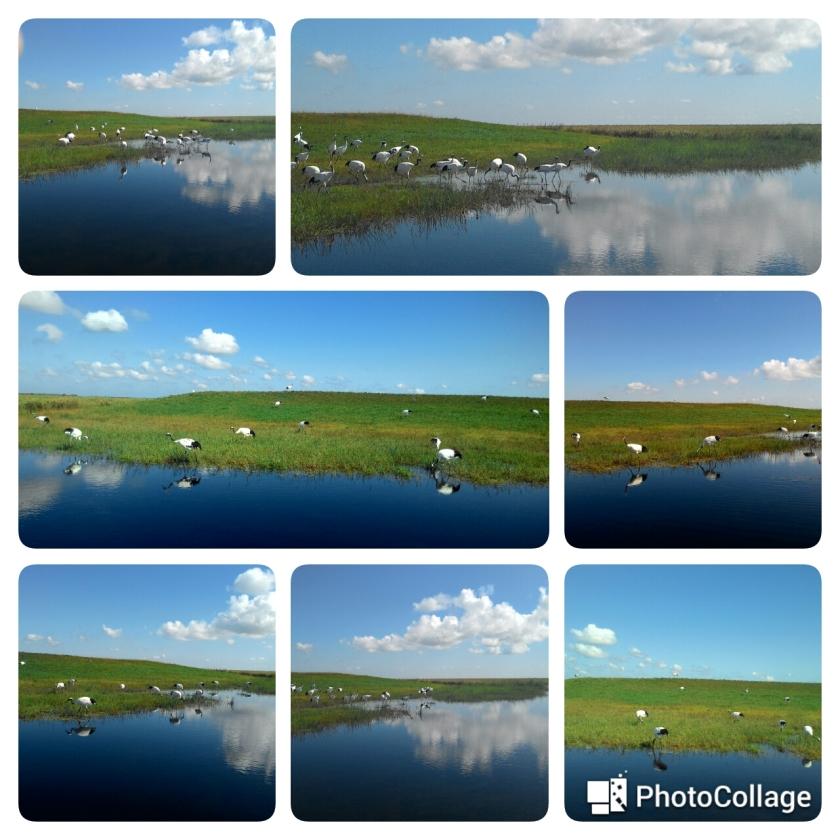 cranes collage