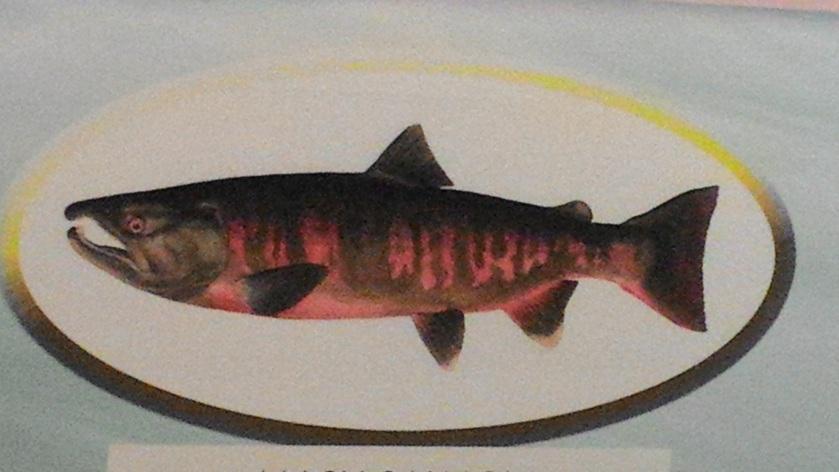 Wuling Salmon
