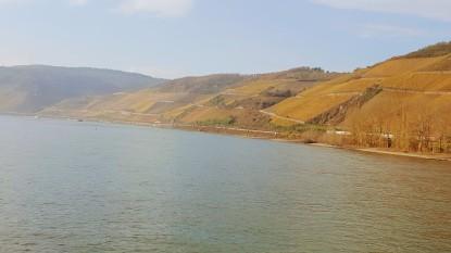 vineyards along the slopes of the Rhine Gorge