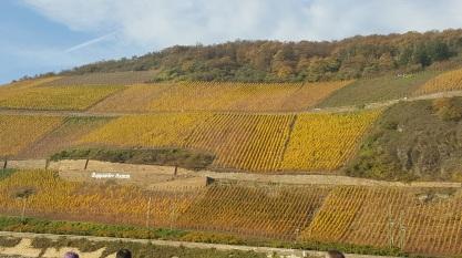 Step terrace vineyards